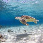 Schilpadden spotten op klein Curacao